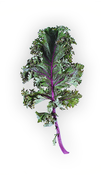 Kale - Red kale. Green kale. Curly kale. Baby kale. Some kale grows in heads. Some in loose sprigs. But all kale is considered one of nature's super foods, and has been cultivated and enjoyed for thousands of years. - via: Evolution Fresh