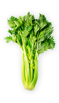 Celery - At approximately 96% water, celery is seriously hydrating and low-calorie. Its high-fiber stalks are packed with vitamin K, can grow up to 3.3 feet, and have an oh-so-satisfying crunch. - via: Evolution Fresh