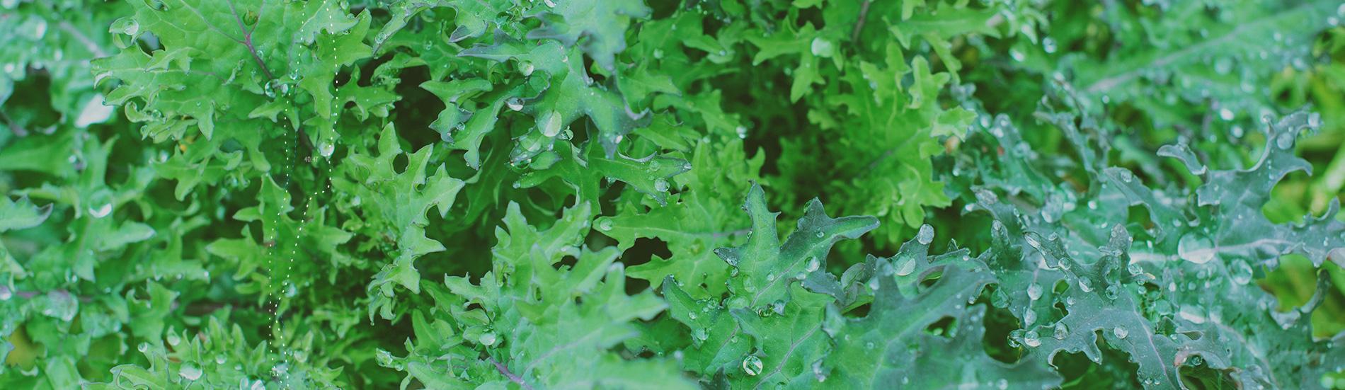Organic Sweet & Savory Greens