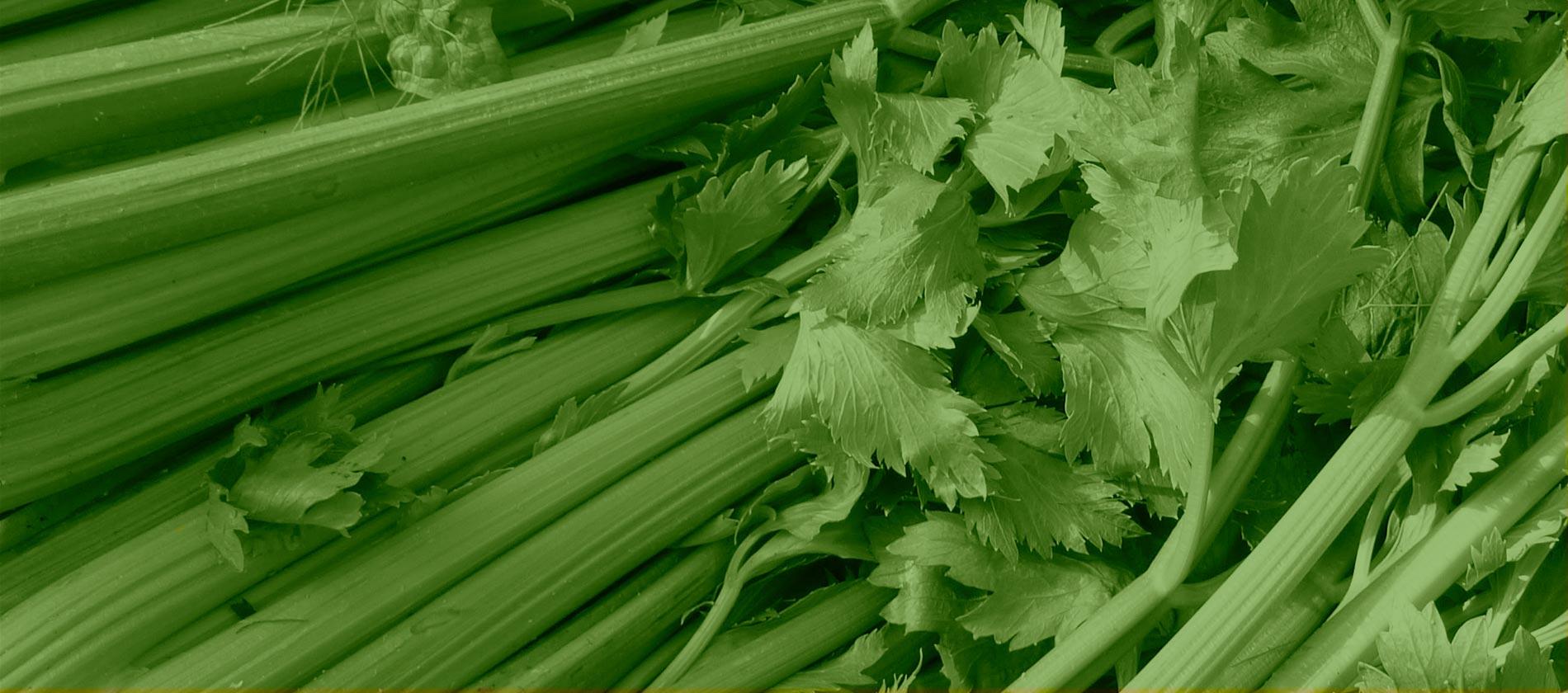 Evolution Fresh | Organic Celery Glow | Cold-Pressed Juice